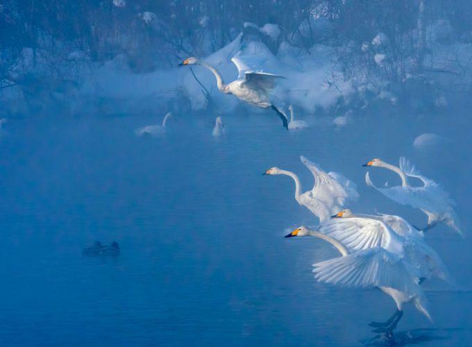 Ф_480_Синий туман озера Светлого